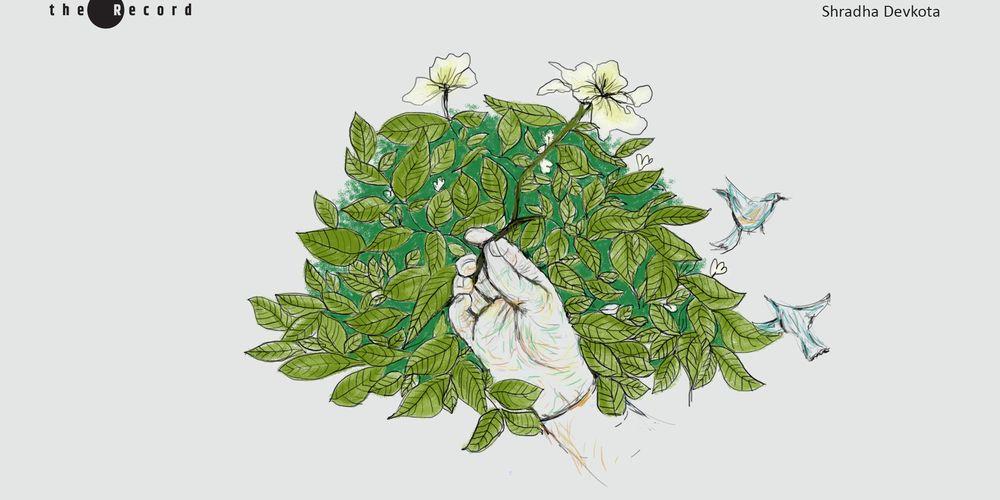 Illustration by Shradha Devkota